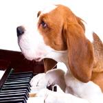 Собака играет на пианино